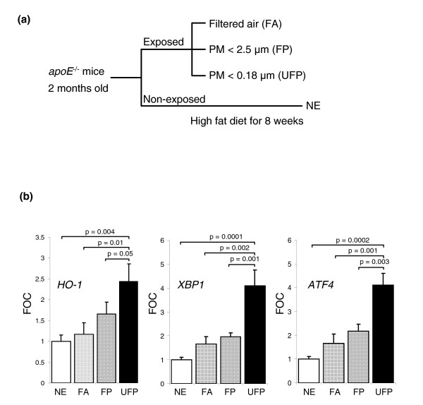 Ambient ultrafine PM chemicals enhance in vivo expression of genes related to vascular inflammation. (a) Experimental protocol. Two-month-old male apoE null mice fed a high-fat diet were exposed for a total of 120 h (5 h/day, 3 days/week for 8 weeks) to concentrated ultrafine particles (UFP), concentrated PM 2.5 (FP), filtered air (FA) or not exposed (NE). (b) Hepatic gene expression levels. Gene expression was determined by qPCR of mRNA prepared from liver homogenates. UFP-exposed mice exhibited marked upregulation of HO-1 (left), XBP1 (center) and ATF4 (right). Values were normalized by β-actin mRNA levels and expressed as fold control (FOC). Five samples per group were assayed in duplicates. Statistical analysis was performed by one-way ANOVA, Fisher PLSD.