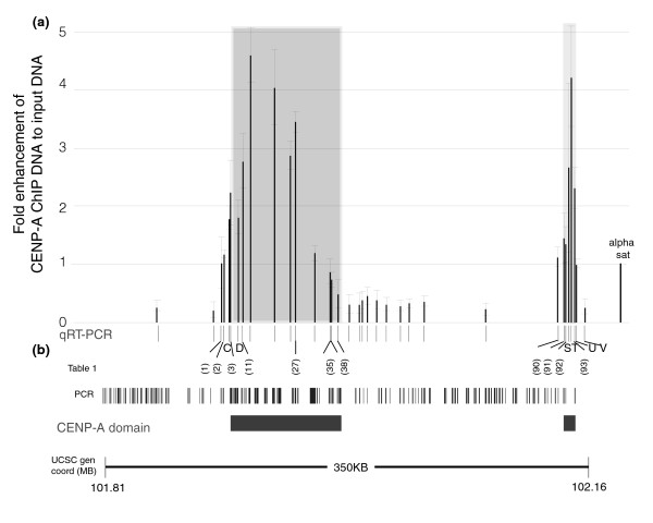 qRT-PCR confirms two separate CenpA domains in the neocentromeric cell line BBB. (a) Quantitative real-time polymerase chain reaction (qRT-PCR) was performed on equal amounts of total DNA obtained from centromere protein (CENP)-A chromatin immunoprecipitation (ChIP) DNA and Input DNA from BBB cell line. The thirty-four PCR primer pairs used (shown as black lines in the x-axis) amplified fragments from 150 to 250 base pairs contained within the 350 kb neocentromere region (see Figure 2). Each primer pair was assayed in at least three independent CENP-A ChIP experiments. The qRT-PCR results for each primer pair were expressed on the y-axis as the fold enhancement between the CENP-A ChIP DNA and input DNA (= 1.93 ΔCt(CENP-A-Input) ) normalized to the value obtained for the positive control alpha satellite DNA primer pair (far right). The shaded region indicates the area determined to be the CENP-A domain in Figure 2. (b) The 34 qRT-PCR primer pairs and the 133 PCR products from this region on the PCR microarray (Figure 2) are shown. qRT-PCR primers that amplified products wholly contained within a PCR microarray fragment are indicated by numbers in parentheses; the rest are labeled alphabetically. Only qRT-PCR fragments shown in Table 1 are indicated; information for all other primers can be found in the Additional data file 3. CENP-A domains derived from the PCR microarray data are indicated. Genome coordinates correspond to the region of chr13 from the Human Genome Browser at UCSC (hg17) [50].