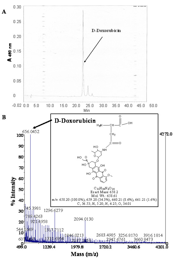 analysis of the Cathepsin-B released material . A. The crude cathepsin-B released material from re-suspended, PEG-precipitated, cathepsin-B treated, doxorubicin-carrying fUSE5-ZZ-(p8)DFK phages was analysed using a gradient of acetonitrile in water on a Waters HPLC machine (RP; C-18 column) following the doxorubicin specific emission wavelength 480 nm. Cathepsin-B released material eluted at 24–25 minutes post injection. B. The crude cathepsin-B released material was analyzed by MALDI TOF MS . The theoretical mass of the aspartate-doxorubicin (shown in the insert) was observed by the mass spectrometry Analysis as a major peak 656.04 (marked by arrow – corresponding to the weight of aspartate-doxorubicin.