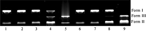 Comparative experiments of the oxidative cleavage of <t>ΦX174</t> plasmid <t>DNA</t> performed by 2 and 3 . Lane 1 control DNA. Lane 2 250 nM solution of 2 . Lane 3 50 nM 2 , in the presence of 5 mM mercaptopropionic acid (MPA). Lane 4 100 nM 2 , in the presence of 5 mM MPA. Lane 5 250 nM 2 , in the presence of 5 mM MPA. Lane 6 250 nM 3 . Lane 7 50 nM 3 , in the presence of 5 mM MPA. Lane 8 100 nM 3 , in the presence of 5 mM MPA. Lane 9 250 nM 3 , in the presence of 5 mM MPA