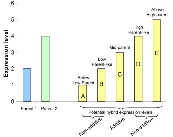 Schematic diagram of potential patterns of hybrid gene expression . This hypothetical gene exhibits higher expression in parent 2 than in parent 1. Five different potential patterns of hybrid expression (A-E) are diagrammed. The hybrid could exhibit (A) below-low parent expression (BLP); (B) low parent-like expression (LP); (C) mid-parent expression; (D) high parent-like expression (HP); or (E) above high parent expression (AHP). Only mid-parent expression is classified as additive. The BLP, LP-like, HP-like and AHP expression patterns would all be examples of non-additive expression.