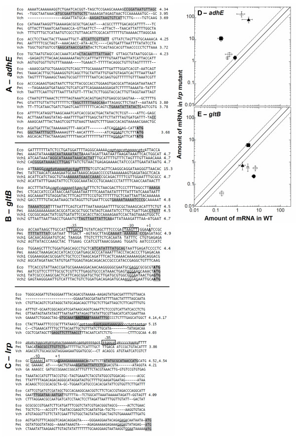 Regulation of orthologous target genes in native backgrounds. A-C: Sequences upstream of adhE , gltB and lrp orthologs. In each case, the sequence ends with the initiation codon. Lrp-binding sites and the transcriptional +1 position are known for E. coli K -12 [112]. Demonstrated Lrp binding sites are in underlined lowercase italics , and the -35 and -10 sequences inferred from the known +1 position (for E. coli ) are boxed. Putative binding sites, predicted by the PRODORIC virtual footprinter [102] are shaded, and the match scores for predicted sites are shown to the right. For E. coli P gltB , one of the predicted sites overlaps an actual site, and gives a particularly high match score, though an overlapping actual site in P lrp does not. V. cholerae has two nearly-tandem copies of the gltBD operon on chromosome I. The 5'-most gltB isozyme (
