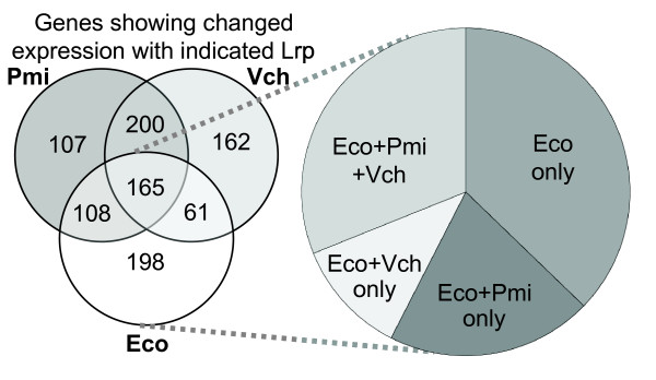 Genome-wide comparison of transcriptional effects of three Lrp orthologs. The Venn diagram shows subsets of E. coli genes that were differentially regulated in response to Lrp orthologs from the indicated species (but not to the vector control). Gene expression was assessed by two-color microarray analysis as described in Methods. The pie chart represents the relative distribution of genes significantly responsive to the E. coli Lrp that are also significantly responsive to the other Lrp orthologs. Details of the statistical analysis of these data are in Methods, and the gene-specific results are available [see Additional file 2 ].