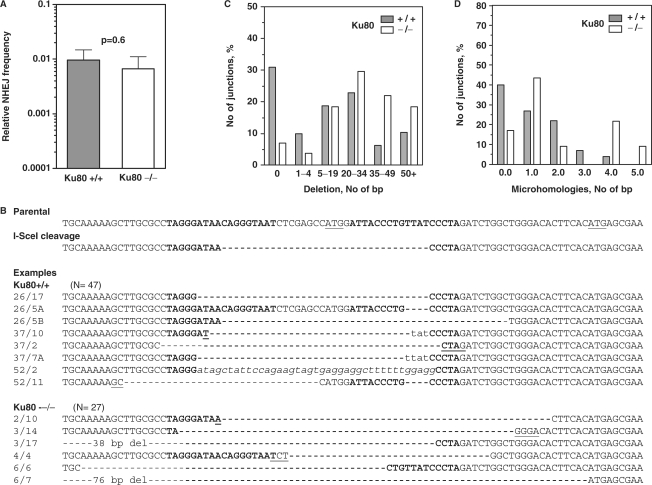 Efficiency and fidelity of NHEJ depending on Ku80. (A) End-joining frequency after induction of DSBs by I-SceI endonuclease analogous to Figure 2A. (B) Examples of repaired DNA sequences obtained from genomic DNA of individual XHATM resistant clones. Display as in Figure 2, italic font indicates inserted nucleotides. (C) and (D) Distribution of deletion length and microhomology usage as in Figure 2.