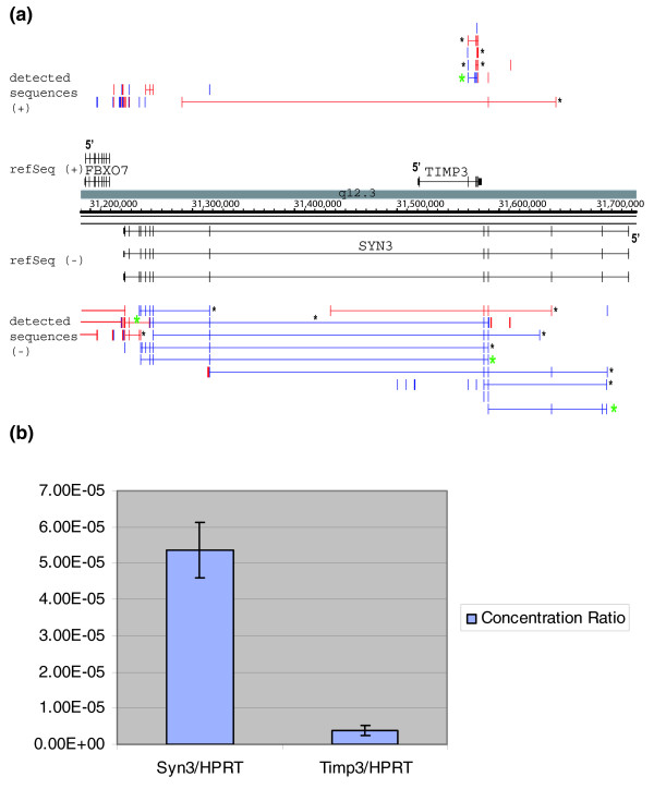 RACE sequencing can detect transcripts not previously detected by microarray analysis in NB4 cells. (a) Integrated Genome Browser (IGB) view SYN3 and TIMP3 rapid amplification of cDNA ends (RACE) products in NB4 RNA. (b) Real-time PCR quantification of SYN3 and TIMP3 transcripts relative to HPRT1 in NB4 cells.