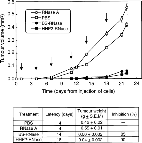 Time-dependent effect of BS-RNase (•-•) and HHP2-RNase (▪-▪) on tumour growth in mice inoculated s.c. (day 0) with 1 × 10 6 ARO cells. RNases were administered in the peritumoral area six times at 72 h intervals as indicated by the arrows. Controls were treated with PBS (□-□) or RNase A (○-○). Latency periods and means of the weights of the tumours excised at the end of each treatment are reported in the table inset.