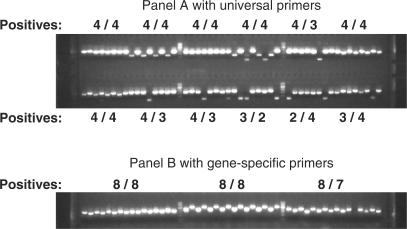 PCR confirmation of genes cloned into Kan-resistant vector (top panel) and Spec-resistant vector (bottom panel). Both cultured cells and plasmid DNAs were used for PCR confirmation. The 1 kb DNA marker (New England Biolabs) was used between every16 lanes. Samples were loaded using a multi-channel pipette, which loads every other well resulting in an interleaved loading pattern. In the upper panel, four individual colonies were screened for each clone using universal primers, which anneal to the vector sequences. Accordingly, clones without the insert amplify a small band of 200 bp. In the bottom panel, eight colonies from each clone were screened using gene-specific primers, so no band is observed for clones that do not contain the desired insert. While the use of gene-specific primers is useful for confirming the identity of a given clone, false negatives can arise due to PCR failures.