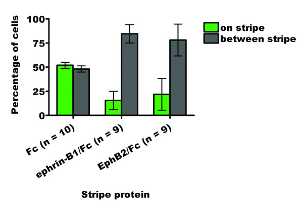 Bar graph summarizing the quantified stripe assay results for the outgrowth of cranial neural crest cells from stage 10–12 chicken neural tube explants onto ephrin-B1 or EphB2 stripe assay substrates (64 μg/ml coating concentration).