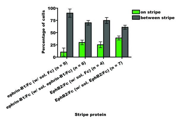 Bar graph summarizing the stripe assay results for the outgrowth of cranial neural crest cells from stage 10–12 chicken neural tube explants onto ephrin-B1 or EphB2 in the presence of soluble competitors. There are significantly more cells found growing on lanes of substrate bound ephrin-B1/Fc or EphB2/Fc protein in the presence of soluble competitor than in the presence of soluble Fc.