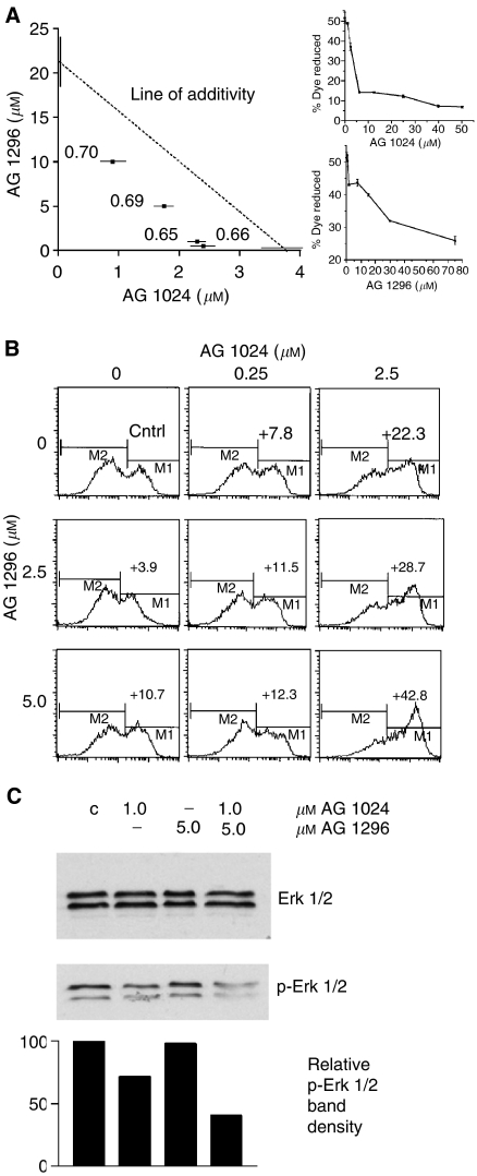 Synergy of IGF-1R and c-kit-targeting treatments. ( A ) Isobologram plot at IC50 and combination index (CI) of the effects of AG 1094 and AG 1296 on H 209 SCLC cell growth. Tests were conducted in triplicates with 10 4 cells treated with tyrphostins singly or in combination for a total of 72 h in RPMI with 1% FBS, and proliferation of the anchorage-independent cells was assayed by Alamar blue dye reduction (shown is an experiment representative of five). Proliferation CI values were calculated using the classic isobologram equation ( Berenbaum, 1981 ) and are indicated on a graph. CI values
