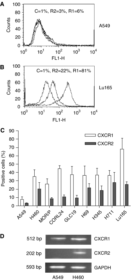 Expression of CXCR1 and CXCR2 in lung cancer cell lines. Expression of CXCR1 and CXCR2 proteins on the cell surface was measured by flow cytometry with mouse anti-human CXCR1 (R1) and CXCR2 (R2) and mouse IgG as control (C). Representative flow cytometric histograms of A549 and Lu165 showing the low expressions of CXCR1 and CXCR2 in A549 ( A ) and high expressions of CXCR1 and CXCR2 in Lu165 ( B ), respectively. Percentage of positive cells of CXCR1 and CXCR2 in nine lung cancer cell lines are summarised in ( C ). Each bar is the mean±s.e. of four independent experiments. Expression of CXCR1 and CXCR2 mRNA was measured by RT–PCR in A549 and H460 (as a positive control) ( D ). Total RNA (1.5 μ g) was reverse-transcribed for PCR reactions of CXCR1, CXCR2 and control GAPDH. The expected 512 bp band of CXCR1 was expressed in A549 and H460. The expected 202 bp band of CXCR2 was expressed in control cell H460 but not in A549 cells.