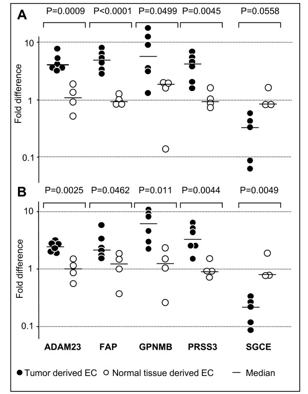 Real-time PCR quantification of gene expression in endothelial cells isolated from human cancer and normal tissue specimens . Endothelial cells were exposed (A) or not (B) to VEGF, EGF, FGF-2 and fibronectin (see Methods for details). Fold differences for each EC population and p values for each gene analyzed are shown. The expression of the target gene was normalized to 18s rRNA for each of the EC populations being evaluated: ΔCt = Ct target - Ct 18s . Statistical analysis on ΔCt values was performed comparing tumor and normal tissue derived EC. Fold differences were calculated according to the comparative ΔΔCt method: Fold difference = 2 -(ΔCt each population-ΔCt ref) by arbitrarily considering the normal tissue derived ECs as reference (ΔCt ref being their average ΔCt value).