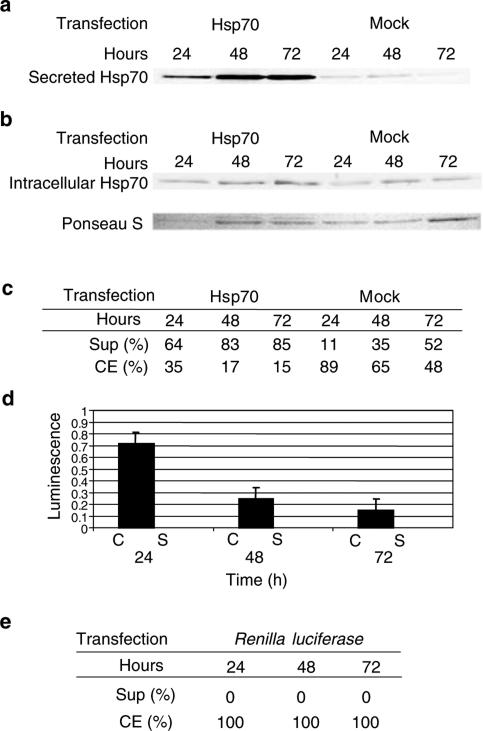 ( A ) Western analysis for Hsp70 in supernatants of pcDNA3.1+Hsp70 and Renilla luciferase or mock-transfected TRAMP-C2 cells. Spent media were collected at 24, 48, and 72 h and concentrated as in Materials and methods. ( B ) Western analysis for Hsp70 in cell extracts of Hsp70, Renilla luciferase , and mock-transfected TRAMP-C2 cells. Ponseau S was used for normalisation. ( C ) Percent of Hsp70 in supernatants (Sup) and cell extracts (CE) of Hsp70 and mock-transfected TRAMP-C2 cells as determined by densitometry. ( D ). Comparison of luciferase activity in cell extracts (C) vs supernatants (S) in C2 cells transfected with pcDNA3.1+Hsp70 and Renilla luciferase at various time points. Spent media and whole-cell protein extracts were prepared as above. ( E ) Percentage of renilla protein was determined by luminescence.