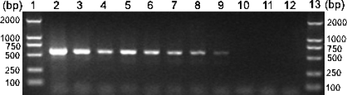 Evaluation of the sensitivity of the specific PCR assay for Cryptocaryon irritans (primer set P1/S15) by agarose gel electrophoresis. Lanes 1 and 13 represent a DNA size marker. Lane 2 represents DNA undiluted (450 ng/µl), and lanes 3 to 11 represent C. irritans DNA diluted for 1:50 (9 ng/µl), 1:100 (4.5 ng/µl), 1:200 (2.25 ng/µl), 1:400 (1.13 ng/µl), 1:800 (0.56 ng/µl), 1:10 3 (0.45 ng/µl), 1:10 4 (45 pg/µl), 1:10 5 (4.5 pg/µl), and 1:10 6 (0.45 pg/µl), respectively. Lane 12 represents no-DNA control