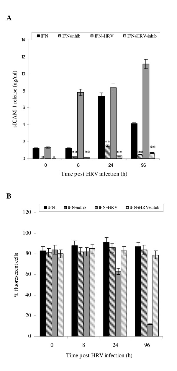 Effect of protease inhibitors on sICAM-1 release (A) and mICAM-1 levels (B) . Cell cultures were pre-incubated with 1 complete™ mini tablet/10 ml of media; sICAM-1 in associated supernatants was assayed using ELISA. Data are mean ± S.E. of three separate experiments (Fig. 7A, *p