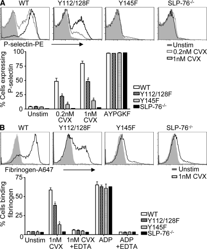 Secretion and fibrinogen-binding defects in SLP76 KI platelets in response to CVX. (A) <t>P-selectin</t> surface expression was analyzed by flow cytometry after stimulation with 0.2 nM or 1 nM CVX, or 1 mM AYPGKF. Representative histograms are shown. (B) Platelets were treated as described in A and were stained with 100 μg/ml of Alexa Fluor 647–labeled fibrinogen. EDTA was added to control for nonspecific binding. Mean percentages ± SEM of P-selectin–positive (A) or fibrinogen-bound (B) cells after the indicated stimulations ( n = 4–6 mice per genotype) are shown. *, P
