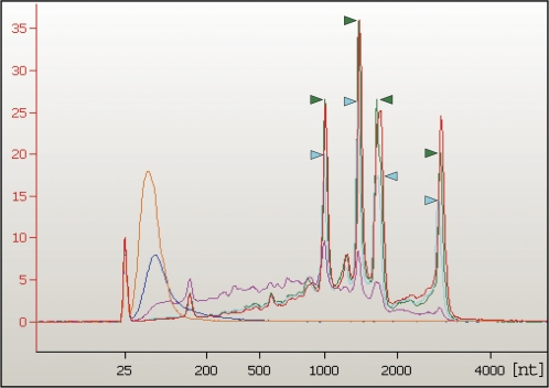 Determination of RNase activity in stylectomy exudate of barley plants. RNase activity was tested with barley leaf total RNA. Samples were separated and visualized using an Agilent Bioanalyzer 2100. Phloem sap (green), leaf extract (blue), water (red), or 1.6 ng ml −1 (light blue), 8 ng ml −1 (pink), or 40 ng ml −1 (orange) RNase A standards were added to total RNA. RNase activity caused a decrease in the amount of high molecular weight rRNA—visible as four peaks between 1000 and 3600 nucleotides (nt)—and an accumulation of low molecular weight RNA fragments between 25 and 900 nt. Note that the peak maxima for the 1.6 ng ml −1 RNase A standard (light blue arrowheads) are consistently lower than the peak maxima for the phloem sample (green arrowheads) and the water control (red curve), whereas the light blue curve runs on top of the red and green (less pronounced) curves in the low molecular weight range. RNA concentration is depicted in arbitrary units and plotted versus the molecular weight in nucleotides determined by an internal RNA size marker.