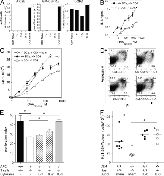 T cell survival is mediated by DC-secreted factors and IL-6. (A) Expression of GM-CSFR-α, GM-CSFR-β (AIC2B), and IL-2Rβ was determined by quantitative RT-PCR using cDNA of cells indicated. Naive CD62L + CD4 + T cells (lane 1) and splenic CD11c + DC (lane 5) were purified by flow cytometry (purity > 98%). Th1 (lane 2), Th2 (lane 3), and Th17 (lane 4) polarized CD4 + T cells. (B and C) DC of GM-CSF −/− or GM-CSF +/+ mice were cultured with purified CD4 + T cells from DO11.10/GM-CSF −/− or DO11.10/GM-CSF +/+ mice, respectively, in the presence of titrating amounts of OVA 323-339. (B) IL-6 levels in the culture supernatant at day 3 were determined by ELISA. (C) Proliferation measured by 3 H-Thymidine incorporation in the absence and in the presence of 20 ng/ml rIL-6. (D) Splenocytes of DO11.10/GM-CSF +/+ or GM-CSF −/− mice were cultured with 1 μM OVA 323-339 in the absence and presence of 20ng/ml rIL-6 for 3 d before staining of cells with KJ1-26 + mAb, Annexin V (AV), and PI and analysis by flow cytometry. Dot plot gated on KJ1-26 + cells shows early apoptotic cells (PI − AV + ), late apoptotic (PI + AV + ), and dead cells (PI + AV − ). (E) GM-CSF–deficient cultures were supplemented with rIL-1, rIL-2, or rIL-6. Proliferation was measured by 3 H-Thymidine incorporation after 3 d of culture. Proliferation index was calculated as described in Materials and methods. (F) CD4 + T cells purified from DO11.10/GM-CSF +/+ or DO11.10/GM-CSF −/− mice were injected i.v. into GM-CSF +/+ or GM-CSF −/− mice, respectively. 2 d later, groups of KO and WT mice were implanted with osmotic minipumps containing hIL-6 or were sham operated. Subsequently, mice were immunized with 200 μg OVA 323-339 peptide emulsified in CFA. After 7 d, draining LN and spleen cells were analyzed by flow cytometry. Symbols indicate total number of splenic KJ1-26 + cells of individual mice. Horizontal lines indicate averages of groups. Shown is one representative experiment of three performed. *,