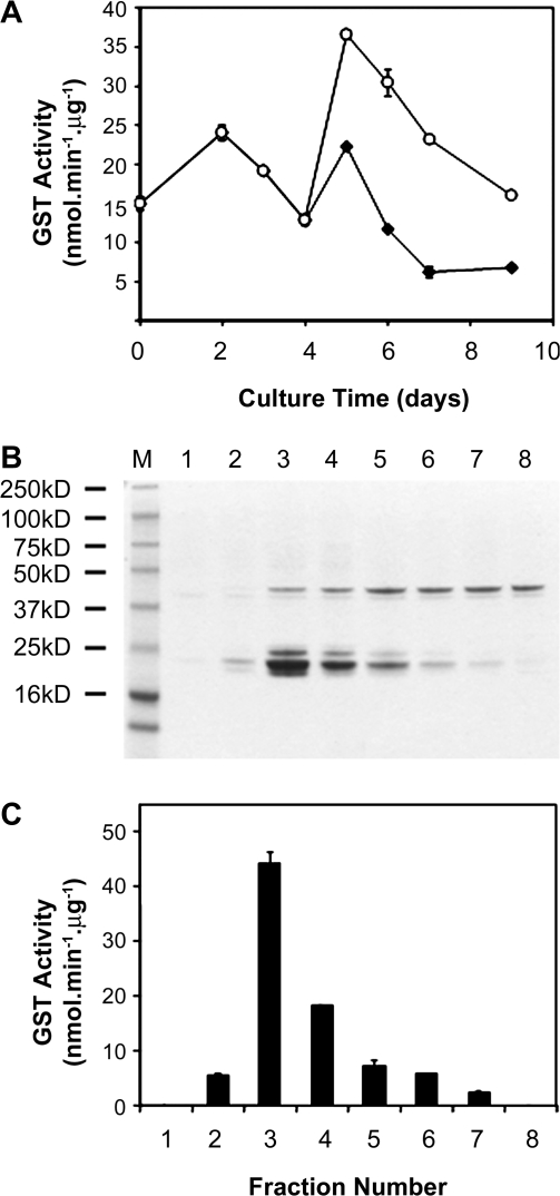 Purification of glutathione-binding proteins from pigmented V. vinifera cell suspension cultures. (A) Vitis vinifera FU-01 cells were cultured in GC-2 medium (filled circles) for 4 d, then elicited with 10 μM jasmonic acid, 20 g l −1 sucrose (or an equal volume of vehicle control), and constant white light irradiation (open circles, 96.8±2.2 μmol s −1 m −2 ). Cultures were incubated at 27±1 °C on a reciprocating shaker at 100 strokes min −1 , in 500 ml Erlenmeyer flasks containing 100 ml of B5 medium ( Gamborg et al. , 1968 ) supplemented with 30 g l −1 sucrose, 250 mg l −1 casein hydrolysate, 0.1 mg l −1 α-naphthaleneacetic acid, and 0.2 mg l −1 kinetin. GST activity, presented as the mean ±SD of three biological replicates performed in triplicate, was determined for the 60% ammonium sulphate precipitate ( n =9). (B) Sixty percent ammonium sulphate precipitate from day 5, non-elicited FU-01 line subjected to GST affinity chromatography. One-dimensional gel electropherogram of fractions (0.5 ml) from the GSTrap column. (C) Corresponding GST activity on the same fractions using CDNB as the model substrate.
