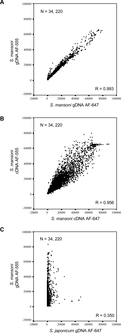 Long-oligonucleotide DNA microarray is specific for S. mansoni nucleic acid material. S. mansoni gDNA hybridizes to the oligonucleotide DNA microarray with greater specificity and less variation compared to S. japonicum gDNA or a mixed pool of S. mansoni cDNA. Scatter plots display signal intensity for all oligonucleotides passing manual exclusion filters in all three displayed experiments. Correlation coefficient values for each comparison, R = 0.993, 0.956 and 0.350 indicate a high degree of correlation between AF555 and AF647 signal intensities from gDNA and cDNA, but not from S. mansoni AF555 labeled gDNA compared to S. japonicum AF647 labeled gDNA. A) Scatter plot for AF555 labeled S. mansoni gDNA compared to AF647 labeled S. mansoni gDNA signal intensities. B) Scatter plot for S. mansoni AF555 labeled cDNA compared to S. mansoni AF647 labeled cDNA (as described in Methods ) signal intensities. C) Scatter plot for S. mansoni AF555 labeled gDNA compared to S. japonicum AF647 labeled gDNA signal intensities. All negative control microarray signals were removed before analysis, microarrays were filtered for manually excluded spots and each experiment was subsequently filtered to contain the same number of spots (n = 34,220).