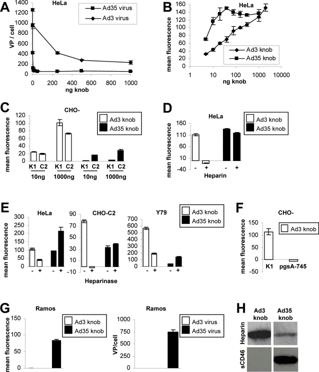 Ad3 but not Ad35 fiber knob interacts with cellular HSPGs. (A) Competition of Ad3 and Ad35 virus particle attachment to HeLa cells using pre-incubation of cells with increasing concentrations of the corresponding knob proteins. (B) Ad3 and Ad35 fiber knob binding to HeLa cells. Note that Ad35 but not Ad3 knob reached saturation of available receptors (for representative flow charts see Figure S2 ). (C) Ad3 and Ad35 knob binding to CHO-K1 and CHO-C2 cells. (D) Heparin competition of Ad3 and Ad35 knob binding to HeLa cells. (E) Heparinase competition of Ad3 and Ad35 knob binding to HeLa, CHO-C2, and Y79 cells. (F) Ad3 knob binding to CHO-K1 and CHO-pgsA-745 cells. (G) Ad3 and Ad35 knob and virus particle binding to Ramos cells. (H) Ad3 and Ad35 knob binding to Heparin and soluble CD46 assessed via western blot. (A–G) Data points represent the mean and standard deviation of experiments performed in triplicate. All experiments were independently repeated at least once with a similar outcome.