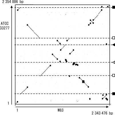 The DNA sequence identity plot of P. gingivalis ATCC 33277 and W83 chromosomes. The dnaA gene is located at the left and bottom corner. Black circles indicate mobile genetic elements (CTn Tn, IS, MITE, or a not-well-defined large mobile element of W83). The chromosomal locations of other genetic elements that mediated inversions or translocations are shown in the right: rrn operons (black squares), duplicated regions coding for a histone-like DNA binding protein, a hypothetical protein and elongation factor P (open squares), 12/13 bp repeat sequences (black triangle), and 11 bp repeat sequences (open triangle).
