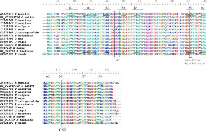 ClustalW alignment of predicted amino acid sequences of plant dsi-1 VOC orthologues identified in the Genbank and TIGR EST databases, including X . humilis , rice ( Oryza sativa ), wheat ( Triticum aestivum ), barley ( Hordeum vulgare ), maize ( Zea mays ), guar ( Cyamopsis tetragonoloba ), runner bean ( Phaseolus coccineus ), soybean ( Glycine max ), walnut ( Juglans regia ), spotted knapweed ( Centaurea maculosa ), oilseed rape ( Brassica napus ), Arabidopsis thaliana , and Loblolly pine ( Pinus taeda ). Boxed amino acids demarcate conserved phosphorylation sites for protein kinase C (PKC) and protein casein kinase II (CK2) identified by PROSITE, and a potential disulphide bonding site predicted by DISULFIND. Amino acids in the X . humilis and A . thaliana dsi-1 VOC orthologues which are predicted to fold into the βαβββ structural repeats characteristic of the VOC superfamily, are underlined.