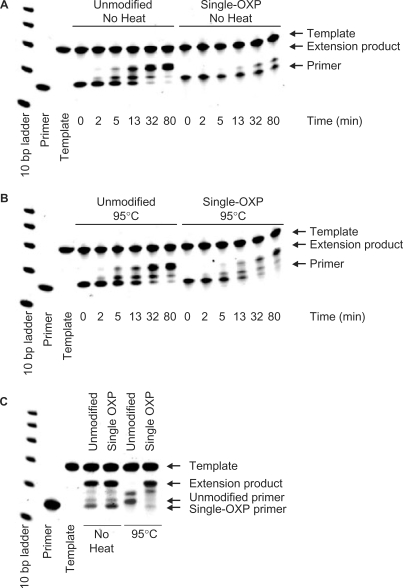 PAGE analysis of primer extension experiments with single OXP-modified and PDE primers. Primer extension with Klenow fragment of DNA polymerase I of nonheated ( A ) and preheated ( B ) single OXP-modified reverse primer, respectively along template 2. The extension reactions were incubated at 25°C for the indicated times after which the reaction mixtures were quenched and analyzed. ( C ) Primer extension with Taq DNA polymerase of PDE and OXP forward primers (nonheated control and preheated sample) along template oligonucleotide 1. Extension reactions were incubated at 25°C for 15 min, after which the aliquots from reaction mixtures were quenched and analyzed.