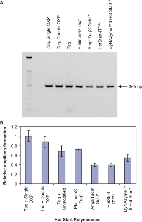 Comparison of the performance of OXP-modified primers to other Hot Start DNA polymerases. ( A ) Agarose gel analysis of the PCR products resulting from the 35 thermal cycles of amplification of five copies of a 365-bp fragment from the HIV-1 tat gene using 0.5 μM unmodified, single OXP-modified and double OXP-modified primers. Reactions containing unmodified primers were amplified by Taq DNA polymerase, Platinum® Taq DNA Polymerase, AmpliTaq Gold® DNA Polymerase, HotStart-IT™ Taq DNA Polymerase and DyNazyme™ II Hot Start DNA Polymerase. Reactions containing single and double OXP-modified primers were amplified by Taq DNA polymerase. ( B ) Graphical representation of PCR amplicon yield. The results from triplicate experiments were averaged and are normalized to the yield of reactions containing single OXP-modified primers plus Taq DNA polymerase. Error bars represent the SD. (*), indicates Hot Start DNA polymerases.