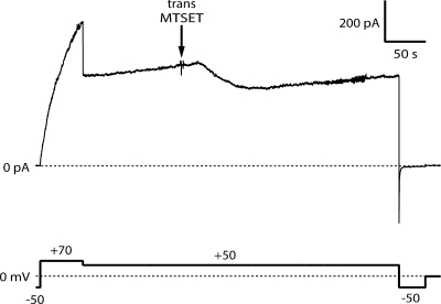 Effect of trans MTSET on the macroscopic current through colicin Ia mutant N578C channels. The top trace shows the membrane current and the bottom trace shows the voltage, each as a function of time. Before the start of the record, DTT was added to the trans compartment to a final concentration of 5 μM and 1.0 μg N578C (along with 4.5 μg octylglucoside and DTT to 5 μM) was added to the cis compartment. We quickly opened on the order of 1,000 channels by stepping the membrane potential to +70 mV, and then switched it to +50 mV to establish a slower channel-opening rate. At the arrow, 200 μg MTSET was added to the trans compartment. This caused a decrease in current of ∼25%, demonstrating that residue N578C was accessible for reaction. Finally, we confirmed that the channels closed normally when the membrane potential was switched to −50 mV. The solution on both sides of the membrane was 100 mM KCl, 5 mM CaCl 2 , 1 mM EDTA, 20 mM HEPES, pH 7.2. (The membrane broke after colicin addition and was reformed before the start of the record; similar results were obtained with membranes that had not broken.)