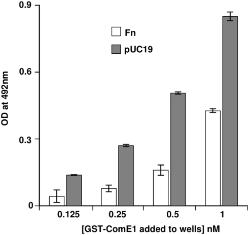 Binding of pUC19 to ComE1. Binding of 1 nM of recombinant GST-ComE1 from P. multocida to immobilised Fn or pUC19 DNA measured by direct binding ELISA. The data are presented as the mean±SEM of triplicate wells. The data shown are representative of three separate experiments.