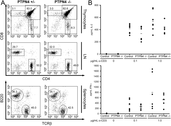Normal T cell development and function in PTPN4-deficient mice. A) Flow cytometry plots of thymocytes, LN cells, and splenocytes from PTPN4-deficient mice and littermate controls showing expression of the indicated markers on live cell populations. Percentages of cells that fall within the indicated regions are shown. Data are representative of three repeat experiments. B) LN T cells were stimulated with the indicated concentrations of CD3 antibody and 0.5 µg/mL CD28 antibody. Concentrations of cytokines in supernatants were determined by ELISA. Each symbol represents the mean of triplicate determinations from a single mouse. Bars represent the mean cytokine secretion. Differences between PTPN4-deficient and control mice are not statistically significant (Paired Student's T test).