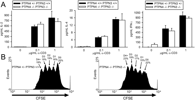 T cell cytokine synthesis and proliferation in PTPN4/PTPN3 double-deficient mice. A) LN T cells were stimulated with the indicated concentrations of CD3 antibody and 0.75 µg/mL CD28 antibody. Concentrations of cytokines in supernatants were determined as in Figure 2 . Each bar represents the mean plus one standard deviation of triplicate determinations from one mouse. Differences between mice are not statistically significant (Student's T-test). Data are representative of six repeat experiments. B) Splenic T cells were labeled with CFSE and stimulated with 0.1 µg/mL CD3 antibody and 0.75 µg/mL CD28 antibody. After 72 h, CFSE dye intensity was measured by flow cytometry. The percentage of live cells that have undergone the indicated number of cell divisions is shown. Data are representative of three repeat experiments.