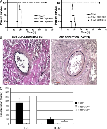 T-bet −/− CD4 T cells produce proinflammatory cytokines and mediate accelerated cardiac allograft rejection in the MHC class II–mismatched cardiac allograft model of CAV. (A) Survival of allogeneic bm12 cardiac graft in CD4- or CD8-depleted (left) and CD4/T-bet or CD8/T-bet DKO (right) recipients ( n = 4 in each group). Survival data are presented as Kaplan-Meier plots. (B) Pathology (elastin staining) of bm12 cardiac allografts from CD4- or CD8-depleted T-bet −/− recipients at 8 and 3 wk, respectively, after transplantation. Note the significant vasculopathy in the CD8-depleted T-bet −/− recipient and, in contrast, the relatively normal vascular integrity in the CD4-depleted T-bet −/− recipient even at 8 wk after engraftment. Bars, 20 μm. (C) IL-6 and IL-17 proinflammatory cytokine production by splenocytes of T-bet −/− , CD4/T-bet DKO, and CD8/T-bet DKO recipients of bm12 heart grafts assessed by the Luminex assay. Bar graphs show means ± SD. Results presented are from one experiment and are representative of three independent experiments.