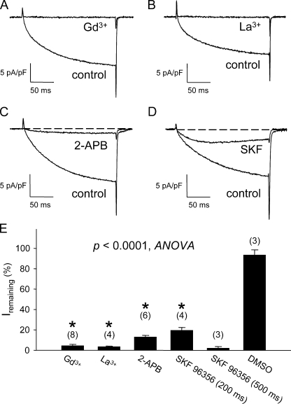 Skeletal muscle L-type current is blocked by nonspecific cation channel antagonists. Acute block of L-type currents evoked by step depolarizations to +30 mV by 100 μM Gd 3+ (A), 100 μM La 3+ (B), 100 μM <t>2-APB</t> (C), and 20 μM SKF 96356 (D). The test pulse was applied after a prepulse protocol (see Materials and methods) ( Adams et al., 1990 ). Results of these experiments and application of DMSO vehicle (0.01%) control experiments are summarized in E. For trivalent cations, maximal block was generally achieved in