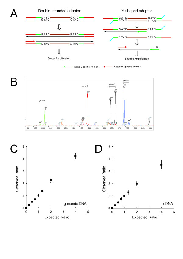Generalized Adaptor-Tagged Competitive PCR (GATC-PCR) . (A) Gene-specific primer (GSP)-dependent amplification from Y-shaped adaptor-tagged template. (B) An example of GATC-PCR. Genomic DNA and cDNA digested with Mbo I were ligated with adaptor A/C and B/C (Table 2 ), respectively, and used for GATC-PCR. The products of four assays (blue, green, red, and black) and a size standard (orange) were separated on ABI 3730 Genetic Analyzer. The fast- and slow-migrating peaks of each pair correspond to the signals from genomic DNA and cDNA, respectively. (C) Linearity of GATC-PCR from genomic DNA templates. Genomic DNAs extracted from the wild and gcn4 Δ cells were combined at appropriate ratios to prepare a series of genomic DNAs containing 0, 0.25, 0.5, 0.75, and 1 copy of GCN4 per haploid on average, digested with Mbo I, and ligated to the adaptors A/C and B/C (Table 2 ). Various combinations of the A/C- and B/C-tagged templates were mixed in a 1:1 ratio, while keeping the total amount equivalent to 3,000 haploid cells, and subjected to GATC-PCR using a GCN4 -specific primer. (D) Linearity of GATC-PCR from cDNA templates. An experiment similar to the one shown in (C) was conducted using cDNAs, instead of genomic DNA, prepared from the wild and gcn4 Δ cells.