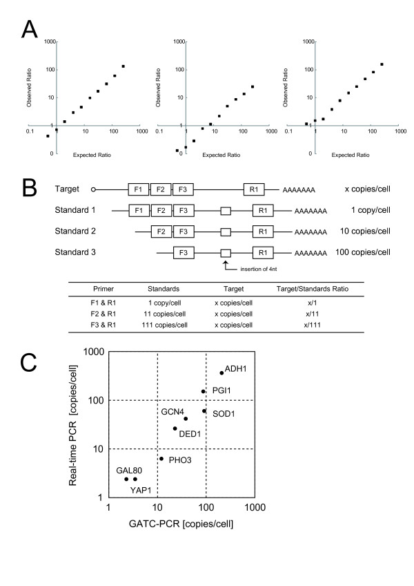 Calibration of GATC-PCR between genomic DNA and cDNA . (A) Competitive amplification of GCN4 between genomic DNA and cDNA. (B) Standard RNAs used for competitive PCR determination of mRNA copy number. (C) Comparison of absolute amounts of eight mRNAs determined by real-time PCR and GATC-PCR. For real-time PCR, we used each GSP for the first strand cDNA synthesis. The GATC-PCR data were calibrated by the competitive PCR quantification of GCN4 mRNA using the standard RNA set (Figure 2B, Table 3 ).