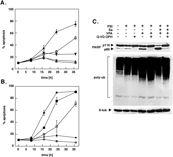 Acceleration of cell death induction by salubrinal is inhibited by the pan-caspase-inhibitor Q-VD-OPH. (A, B) K562 cells were exposed to 5 nM PSI in conjunction with 10 µM salubrinal and/or 2 mM VPA for the indicated intervals after which cells were monitored for apoptosis by FACS analysis. The pan-caspase inhibitor Q-VD-OPH was added simultaneously with the other compounds (5 µM final concentration). Data represent the means±SD of an assay performed in triplicate out of two independent experiments with similar results. DMSO control (open circles), PSI 5 nM (open squares), salubrinal 10 µM open triangles), PSI+salubrinal (filled triangles), PSI+salubrinal+Q-VD-OPH (filled inverted triangles), PSI+VPA 2 mM (filled squares), PSI+VPA+salubrinal (diamonds), PSI+VPA+salubrinal+QVD-OPH (filled circles); (C) Whole-cell lysates were prepared from cells incubated with 5 nM PSI, 2 mM VPA and 10 µM salubrinal as indicated, separated by SDS-Page and transferred to nitrocellulose membranes. The membranes were sequentially probed for PARP, polyubiquitylated proteins and ß-tubulin.