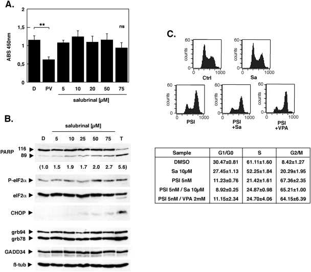 Salubrinal is nontoxic, but elicits a G2/M arrest in K562 cells. (A) K562 cells in a 96 well plate were exposed to variable concentrations of salubrinal for 15 h after which viability of cells was assessed by incubation with WST-1 reagent. Soluble formazan formation was determined by absorption measurement at 450 nm. Cells incubated with DMSO served as solvent control; incubation with 5 nM PSI and 2 mM VPA was a control for effective apoptosis induction. Data are presented as means±SD (n = 3); (B) Whole-cell lysates were prepared from cells that were treated with increasing concentrations of salubrinal, separated by SDS-PAGE and transferred to nitrocellulose membranes. Membranes were sequentially probed for P-eIF2α, eIF2α, CHOP, PARP, KDEL, GADD34 and ß-tubulin. Incubation with 2 µM thapsigargin served as positive control for the induction of ER-stress. The extent of PARP cleavage was determined by densitometry and is provided as fold increase in brakets below the Western blot for PARP. Shown are representative blots obtained from at least two independent experiments with similar results (C) K562 cells exposed to 5 nM PSI, 10 µM salubrinal and 2 mM VPA as indicated were stained with propidium iodide and analyzed by fluorescence-activated cell sorting. Histograms are representative examples. Cell cycle distribution values were derived by gating for viable cells followed by application of Modfit 3.0 software (Becton Dickinson). Data are presented as means±SD (n = 3).