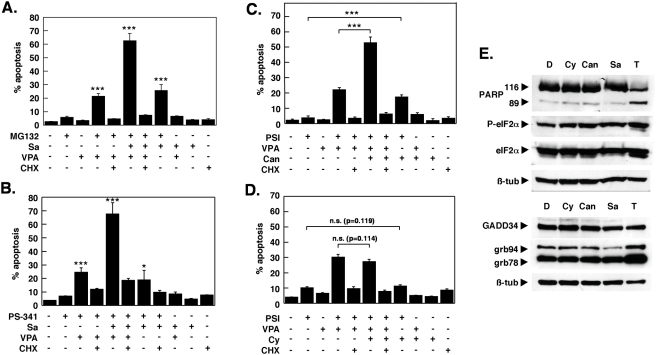 The salubrinal-enhanced toxicity is not restricted to PSI and is recapitulated by the PP1/PP2A inhibitor cantharidin. (A) K562 cells were exposed to 100 nM of the proteasome inhibitor MG132, 10 µM salubrinal and VPA for 18 h as indicated, after which apoptosis induction was assessed by fluorescence activated cell sorting of cells with a subdiploid (G