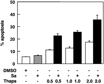 Salubrinal promotes the cytotoxic effects elicited by the ER stressor thapsigargin. K562 cells (10 5 /ml) were exposed for 18 h to thapsigargin (0.5–2.0 µM) either alone or in combination with 10 µM salubrinal. Apoptosis was determined by fluorescence activated cell sorting of cells with a subdiploid (G