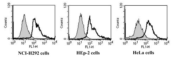 Cell surface binding of rAbOmpA . The grey shaded region represents the control fluorescent level seen in the cells treated with polyclonal anti-rabbit AbOmpA antibody and Alexa Fluor ® 488-conjugated secondary antibody without the addition of rAbOmpA. The solid line represents the fluorescent level seen in the cells treated with 6 μg/ml of rAbOmpA.