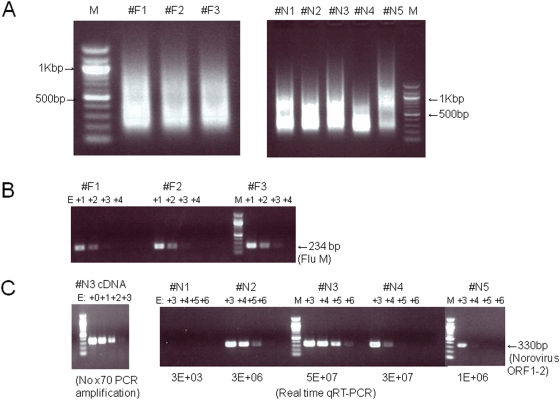 Random RT-PCR amplification of cDNA from clinical specimens and quantitative RT-PCR with virus-specific primers. The samples were nasopharyngeal aspirates and stools (n = 3 and 5, respectively) isolated during 2005–2007 in Osaka, Japan. Influenza A virus and norovirus were detected in the nasopharyngeal aspirates and stool samples, respectively, with other diagnostic methods. (A) RNA extracted from clinical specimens was reverse-transcribed and random-PCR amplified to prepare template DNA for pyrosequencing. One microgram of amplified PCR products in each sample was loaded onto a 1% agarose gel. M indicates 100-bp DNA ladder (NEB). (B) Flu-specific semi-quantitative PCR was performed with 10-fold serial dilutions of the random-PCR products. (C) Norovirus (GII)-specific semi-quantitative PCR was performed with 10-fold serial dilutions of the random-PCR products. Quantitative real-time RT-PCR using a norovirus-specific primer set was also performed, and the estimated copy numbers of norovirus in samples #N1–#N5 are shown in the panel on the right. As a control, cDNA from sample #N3 without random PCR amplification was used (left panel).