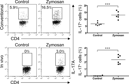 Zymosan induces IL-17 production in splenic LTi-like cells in vivo. (left) Intracellular staining of IL-17A was performed with in vitro conventional staining (top) or in vivo staining (bottom). For conventional staining, Rag2 −/− mice were challenged with PBS (Control) or 12.5 mg zymosan i.p. Splenocytes were isolated 2 h later and stimulated with PMA/Iono and BFA for 2 h in vitro. The proportion of IL-17A–producing LTi-like cells was evaluated by intracellular staining. For the in vivo staining, Rag2 −/− mice were injected with PBS (Control) or 12.5 mg zymosan i.p. together with 0.25 mg BFA i.v. (reference 22 ). The proportion of IL-17A–producing LTi-like cells in spleens was directly evaluated by intracellular staining. (right) The mean values (horizontal bars) for IL-17A–producing LTi-like cells were calculated for in vitro staining (top, n = 6) and in vivo staining (bottom, n = 6). Data are representative of three (top) or two (bottom) independent experiments. ***, P