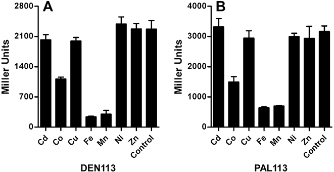 The TroR Td repressor responds to Mn 2+ and Fe 2+ in E. coli . (A) Strain DEN113 expressing pTDE100 ( T. denticola tro P/O- lacZ reporter) and pPJB113 (expresses TroR Td ) or (B) strain PAL113 expressing pPAL100 ( T. pallidum tro P/O- lacZ reporter) and pPJB113 (expresses TroR Td ) were grown aerobically overnight in M9CG media supplemented with various divalent cations (5 μM) or in unsupplemented M9CG media (control). β-Galactosidase activity of the overnight cultures was determined as described by Miller (1972) . Results represent the means and standard deviations of three independent experiments.