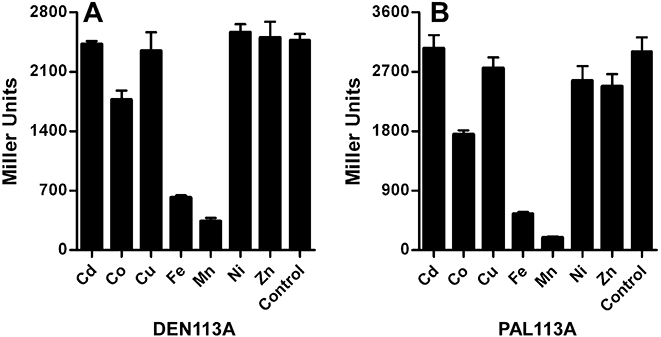 TroR Td Δ157−222 repressor responds to Mn 2+ and Fe 2+ in E. coli . (A) Strain DEN113A harbouring pTDE100 ( T. denticola tro P/O- lacZ reporter) and pPJB113A (expresses TroR Td Δ157−222 ) or (B) strain PAL113A harbouring pPAL100 ( T. pallidum tro P/O- lacZ reporter) and pPJB113A (expresses TroR Td Δ157−222 ) were grown aerobically overnight in M9CG assay media supplemented with various divalent cations (5 μM) or in unsupplemented M9CG media (control). β-Galactosidase activity of the overnight cultures was determined as described by Miller (1972) . Results represent the means and standard deviations of three independent experiments.