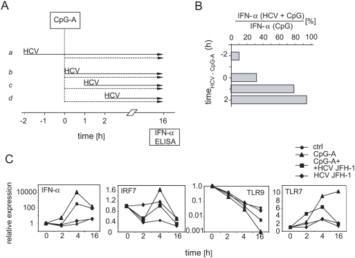 Kinetics of disruption of CpG-A-mediated stimulation of pDCs with HCVcc. (A) Flow chart protocol showing inoculation with HCV (solid arrows), treatment with CpG-A (dashed arrows), and IFN-α assay determined by ELISA. (B) Percentage of IFN-α secreted by pDCs that were stimulated with CpG-A and HCV relative to IFN-α secretion by pDCs stimulated only with CpG-A. Purified pDCs were inoculated with 100 HCVcc RNA copies per cell. (C) Effect of HCVcc on the expression of IFN-α, IRF-7, TLR7 and TLR9 mRNA. pDCs were primed with HCVcc and stimulated with CpG-A as shown in panel A, line a . The gene expression levels were determined with real-time PCR were normalized to GAPDH expression. Data are presented as fold induction over medium control at time zero (given the value of 1.0) and are from one of three representative experiments.