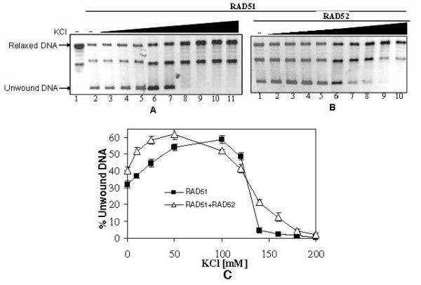 KCl induced changes in dsDNA unwinding by RAD51 . Relaxed φX174 DNA (30 μM) along with Topo I was incubated with RAD51 [3.0 μM] in presence of increasing concentration of KCl [0 mM, 10 mM, 25 mM, 50 mM, 100 mM, 120 mM, 140 mM, 160 mM, 180 mM 200 mM] with ATP either in presence of RAD52 [2.0 μM] (Panel B: lanes 1–10) or in its absence (Panel A: lanes 2–11). Lane 1 in Panel A represents no protein control. Unwound DNA band intensity was expressed as percentage of total DNA band intensities per lane and plotted as a function of KCl concentration (Panel C).
