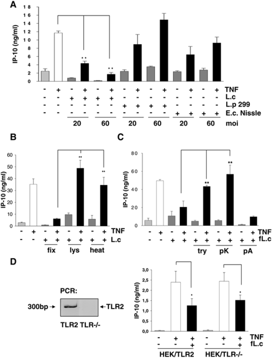 The inhibition of TNF-induced IP-10 secretion is mediated by a surface protein of L. casei. (A) Mode-K cells were stimulated for 24 h with L. casei , Lactobacillus plantarum 299v or E. coli Nissle 1917 (moi as indicated) with or without TNF (10 ng/ml) activation for 24 h. The concentration of IP-10 and IL-6 in cell culture supernatants was measured by ELISA. Bars represent mean values (+/− SD) of triplicate samples. (B) Mode-K cells were stimulated with L. casei (moi 20) killed by formaldehyde fixation (fix), lysozyme (lys)-digestion or heat (heat)-treatment with or without TNF (10 ng/ml) activation for 24 h. (C) L. casei was treated with trypsin (try), proteinase K (pK) or phospholipase A (pA) followed by formaldehyde-fixation (fL.c). (D) TLR2 deficient as well as TLR2 expressing HEK293 cells (absence/presence of TLR2 in the cells was analysed by real-time PCR) were stimulated for 24 h with TNF (10 ng/ml) and L. casei (moi 20). IP-10 concentration was measured in the culture supernatants by ELISA. The bars represent mean values (+/− SD) of triplicate samples.