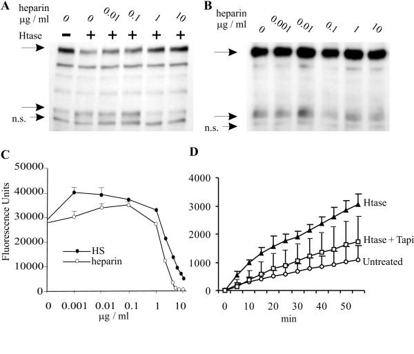 Exogeneous heparin or HS inhibit heparitinase-induced ErbB4 80 kDa fragment formation . A) Small concentrations of heparin slightly enhance the heparitinase-induced ErbB4 80 kDa fragment formation, whereas 1 μg/ml heparin and higher concentrations inhibit ErbB4 80 kDa fragment formation as indicated in lysates of T47D cells. B) Incubation with increasing concentrations of bovine lung heparin only did not have marked effect on cells. N. s., non-specific staining in A and B. C) Both heparin and heparan sulfate inhibited activity of recombinant TACE at high concentrations but displayed some enhancement of enzyme activity at low concentrations D) Heparitinase treatment of living MCF-7 cells enhanced cleavage of fluorescent TACE substrate peptide (p = 6 × 10 -11 ) and the effect of heparitinase could be largely reverted by adding 40 μM TAPI-0 to the incubation medium (p = 10 -5 ). The p-values were calculated with two-tailed pairwise Student's test comparing all time points. The enzyme activity analysis was performed three times with similar results. The data shown represents results from a single assay.